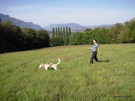 L'été avec les chiens de traîneaux