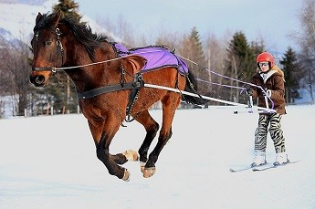 Ski-joëring