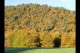 plateau de glaise - La féclaz en automne