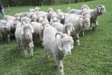 La Chèvrerie des Tannes et Glacières